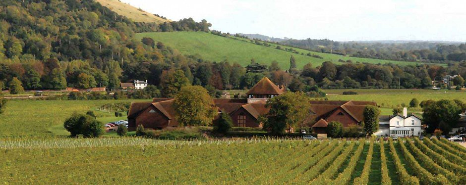 Denbies vineyard